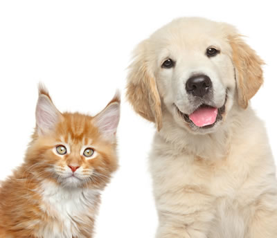 Pet friendly House Cleaners in Swansea